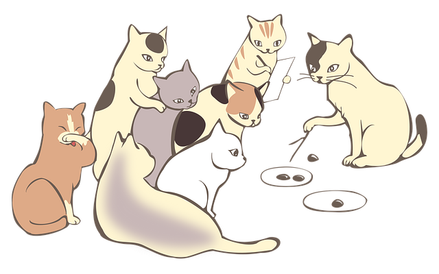 osm koček.png